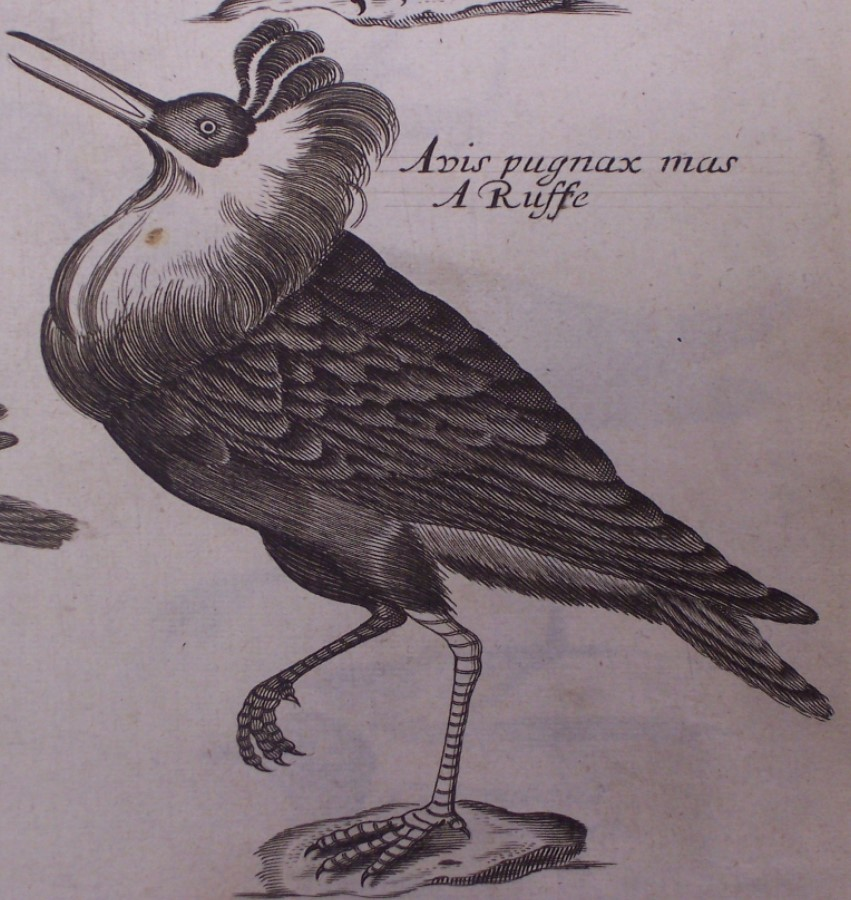 Willughby's Ornithology
